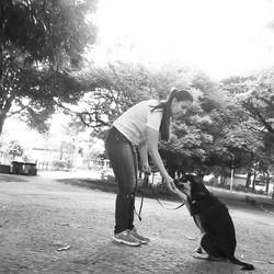 Cão Passeador - Dog Walker