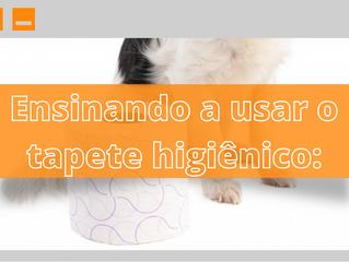 Como ensinar seu cão a usar o tapete higiênico?