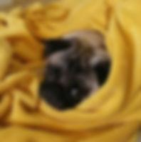 Pet Sitter Campinas