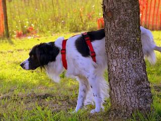 Sabia que os Cães não vão ao banheiro?