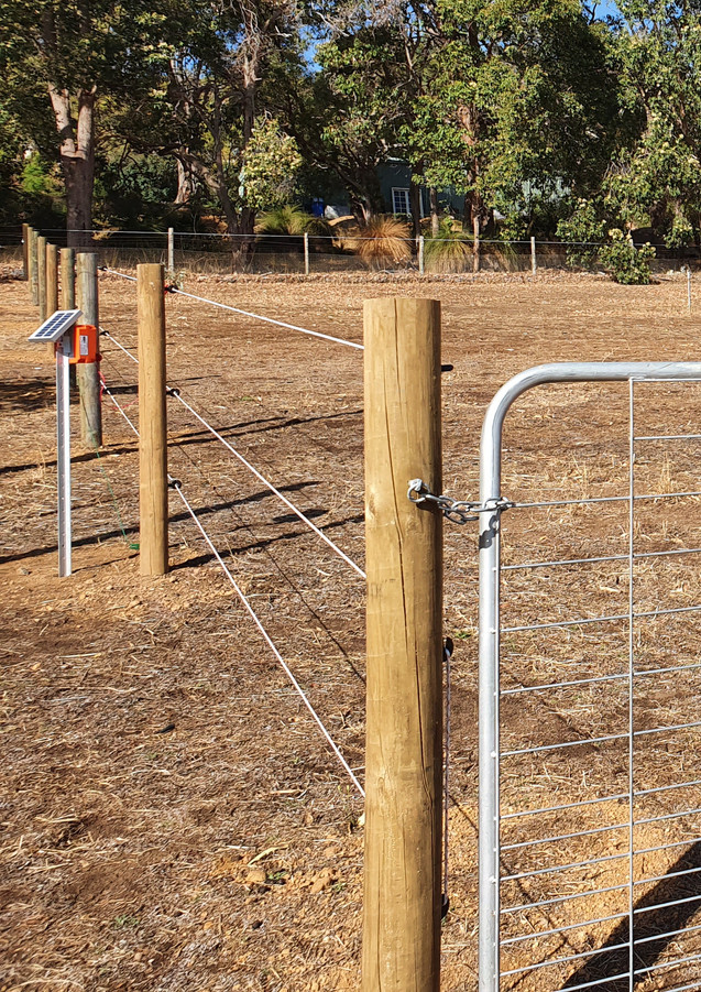 Horse Electric Fence