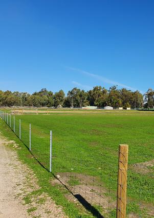 Sheep paddocks (Ringlock)