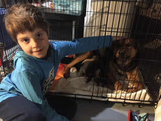 Helping shelter dogs one word at a time