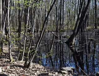 Pincourt encourages residents to submit biodiversity data that could help save Rousseau Forest
