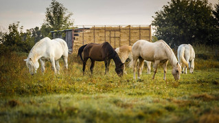 Help needed for A Horse Tale Hay drive