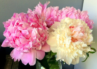 Don't shoot me, I'm only the peony player