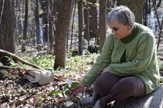 Pincourt residents still hopeful forest can be saved from development