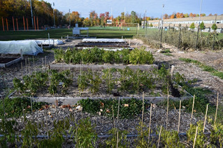 Pincourt will move community garden if new arena is built on school board land