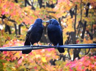 Halloween night, bird-style
