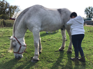 Horses helping health workers