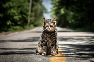 A peek into the Pet Sematary shoot