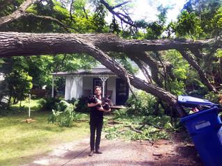 Uncommon tree breaks in storm
