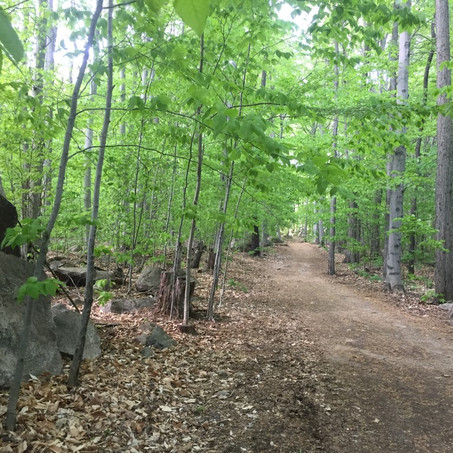 Mont Rigaud land bought to prevent development