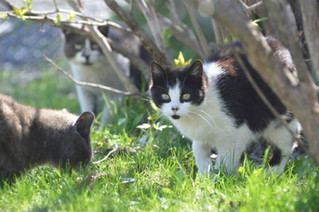 A different approach to stray and feral cat colonies