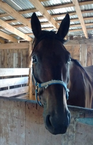A Horse Tale and Zee Grub Easter event features sugar shack fare, BBQ, and horses