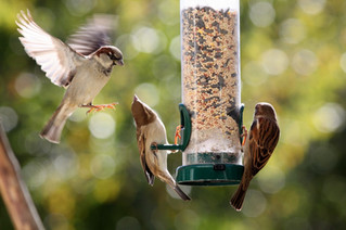 More about bird feeders