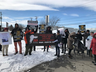 Animal rights protesters mark one-year anniversary at Baie d'Urfé laboratory