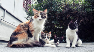 Appeal to help stray cats in our communities