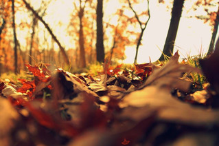 Autumn Leaves, the Canadian Tartan and the Maple Leaf