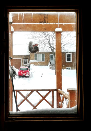 The squirrel was angry that day my friend…
