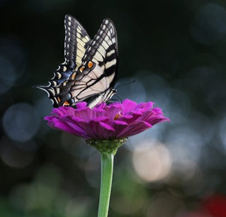 Benefits of pollinators