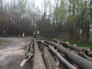 Sandy Beach lot cleared during prohibited season