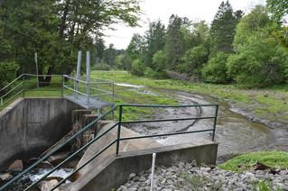 Pine Lake considered for fish habitat restoration project
