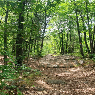 Proposed regional park for Rigaud Mountain receives Quebec financial support