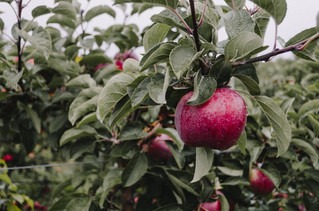 Volunteers wanted to plant fruit trees and shrubs
