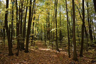 Fundraiser concert to preserve forest