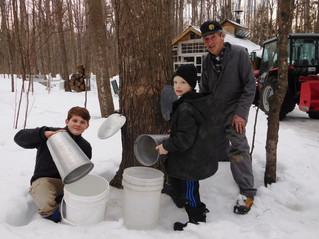 Warmer weather welcomed by local maple syrup tappers