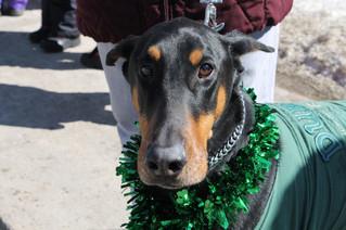 Rosie Animal Adoption fundraiser