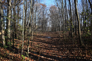 Pincourt residents hope to save Rousseau Forest from development
