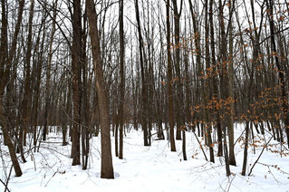 New Pincourt environmental group deposits Rousseau Forest study