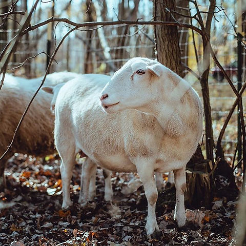 LaLa, one of the residents at Foreverland Farm