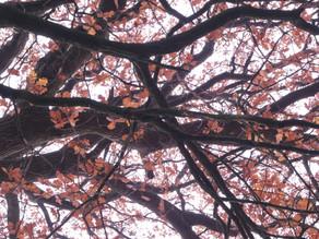 L'énergie puissante de l'automne