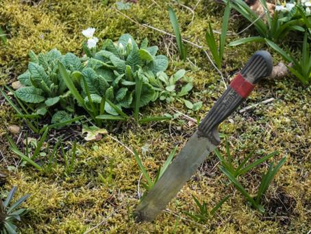 My favorite gardening tool