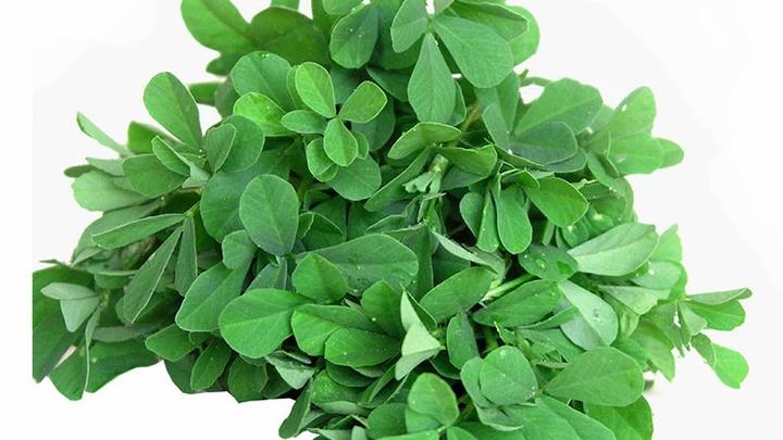 Methi (Fenugreek) Leaves, 1 Bunch