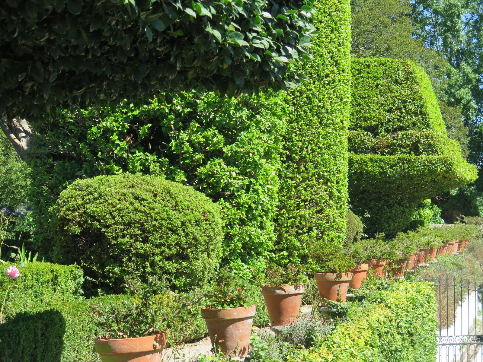 Camellia Trees