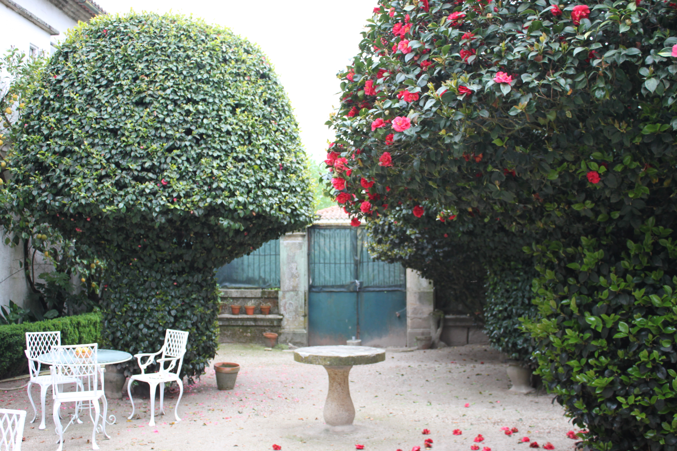 """The """"Mushroom"""" Garden"""