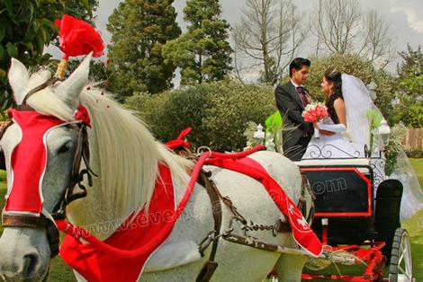 carruaje-para-bodas.png