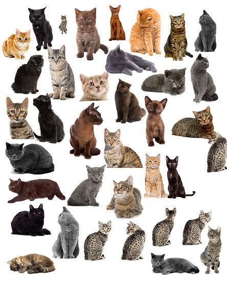 cat hiddenpix 2 NEW.jpg