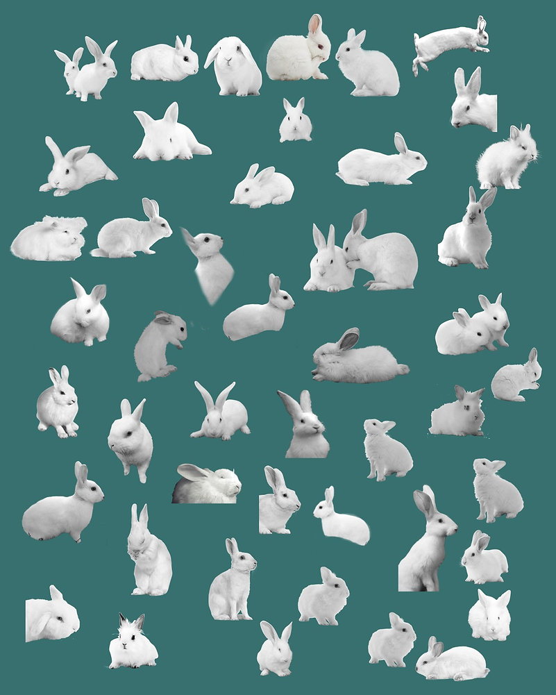 BUNNY GALLERY FOR REFERENCE ON WEBSITE H