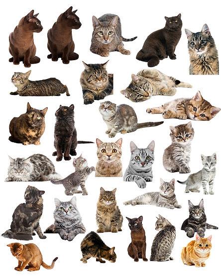 cat hidden pix gallery NEW 1.jpg