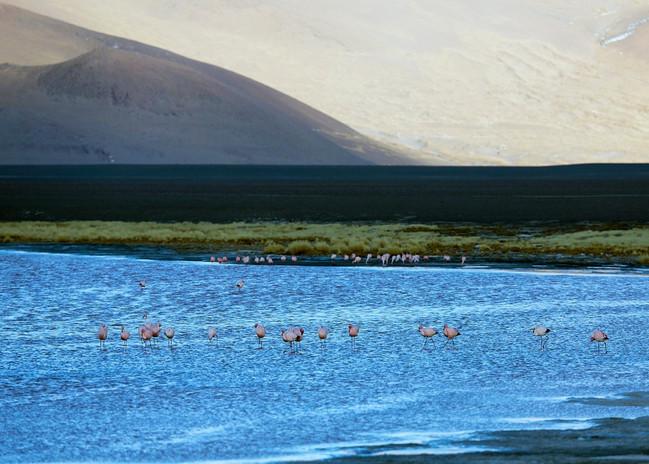 mountain lake with flamingos.jpg