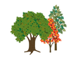 group 3 trees C.png