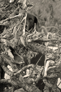 cobie behind the tree warming filter.jpg