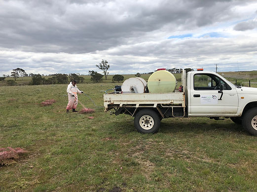 weed spraying, herbicide spraying, environmental services, Melbourne, Australia