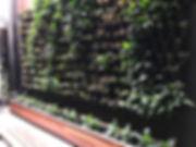 Green wall Melboune vertical garden