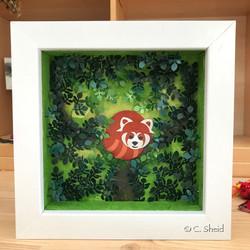 Petit Panda roux surpris lors de sa